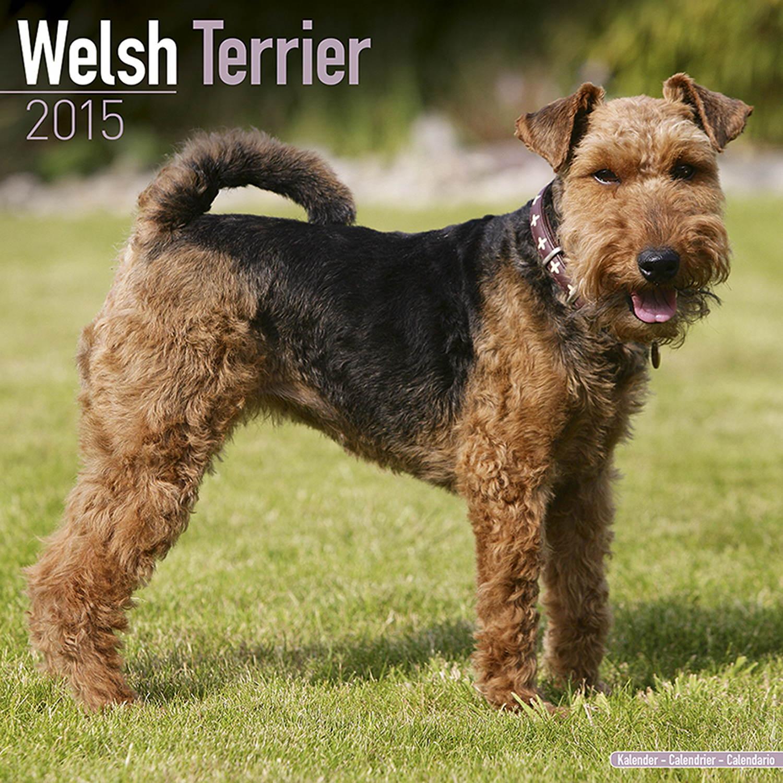 Price Of Welsh Terrier Welsh Terrier Calendar...